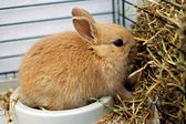 Rabbit feeds from the trough — Stock Photo