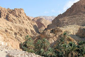 Canyon and the desert oasis of Tozeur — Stock Photo