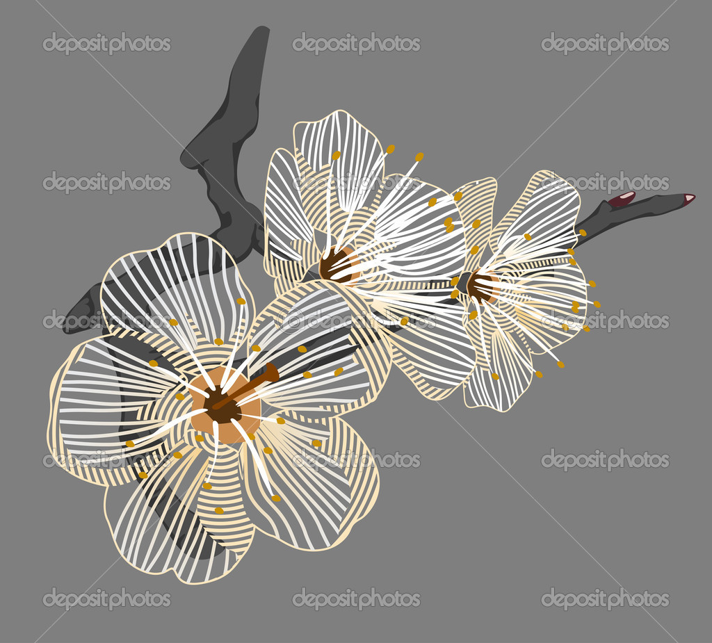 White flower on a branch  Stock Photo #10553452