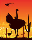 Wild ostriches and eagle among the cacti — Stock Photo