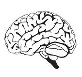 Drawing brain closeup — Stock Photo