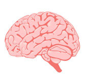 Pink brain the side view — Stock Photo