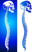 Man spine — Stock Vector