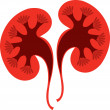 Kidney logo — Stock Vector