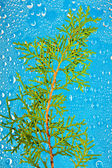Sprig on blue abstract background — Stock Photo