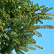Fur-tree over the blue sky — Stock Photo #9715249