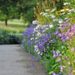 Stock Photo: Empty Path With Floral Border