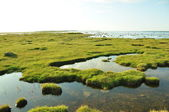 Clear Waters Of Wetland Marshes — Stock Photo