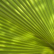Palm leaf texture — Stock Photo #9283090
