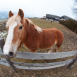 Fisheye portrait of a horse — Stock Photo