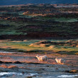 Beautiful Iceland scenery with pair of sheep — Stock Photo #9283227
