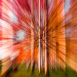 Colourful warp in the forest — Stock Photo #9283327