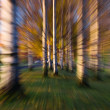 Colourful warp in the forest — Stock Photo