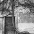 Vintage door and old crooked tree — Stock Photo
