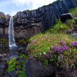 Svartifoss, famous Black waterfall, popular tourist spot in Iceland's Skaftafel national park — Foto de Stock