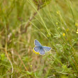 Blue butterfly in the grass — Stock Photo