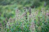 Urtiga na chuva — Foto Stock