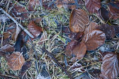 Frozen leaves on the ground — Stock Photo