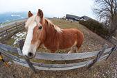 Fisheye retrato de um cavalo — Foto Stock