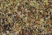 Autumn forest carpet — Stock Photo