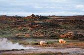 Landschaftliche schönheit island mit paar schafe — Stockfoto