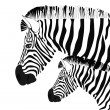 Zebra and baby — Stock Vector