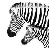 Zebra and baby — Stock Vector