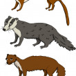 Stock Vector: Mustelids