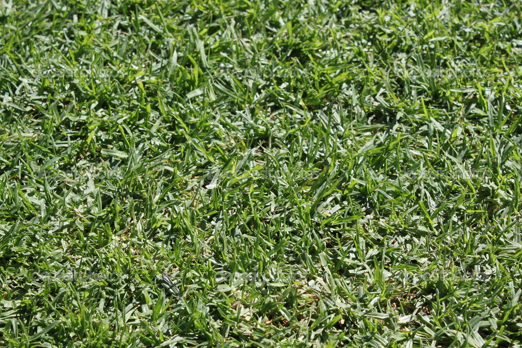 Grass texture with sun light — Stock Photo #10432909