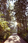 Forest path and sunrays — Stock Photo