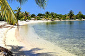 Sunny Caribbean beach — Stock Photo