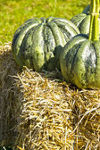 Pumpkin on straw — Stock Photo