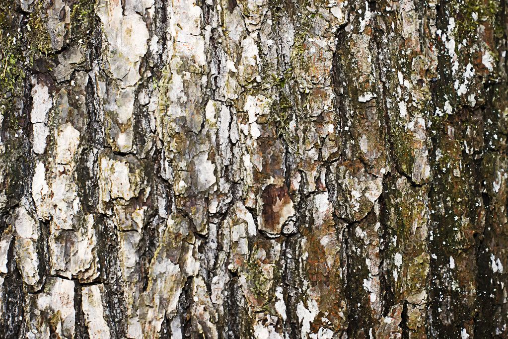 Tree texture detail — Stock Photo #8774212