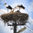 A family of storks — Stock Photo