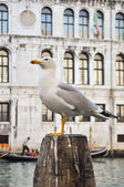 SEAGULL ON POLE — Stock Photo