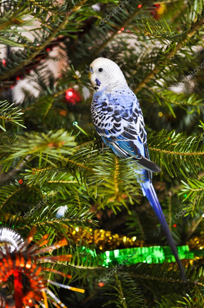 Parakeets blue in Christmas tree. — Lizenzfreies Foto #9183178