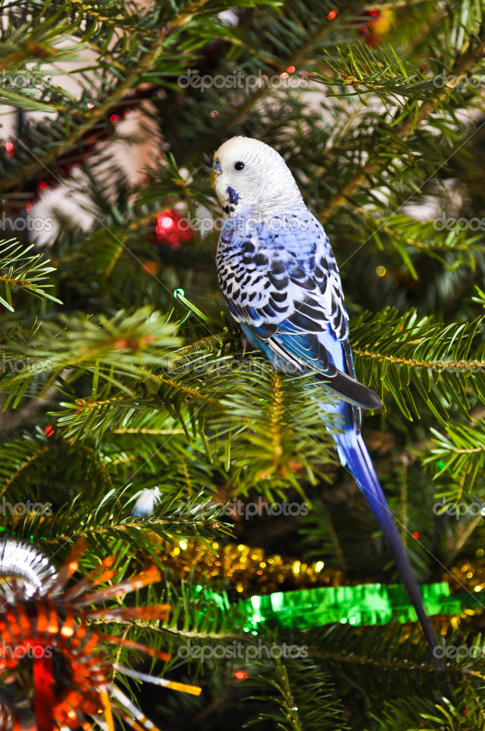 Parakeets blue in Christmas tree. — Stockfoto #9183178
