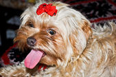Hond portret — Stockfoto