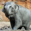 Elephant — Stock Photo #8564832