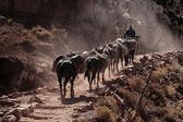 ковбой — Стоковое фото