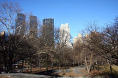 Central park — Stock fotografie