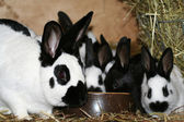 Rabbits — Stock Photo