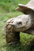 Tortoise — Foto de Stock