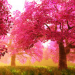 Cherry Blossoms Trees 01 - Stockfoto
