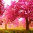 Cherry Blossoms Trees 01 - 