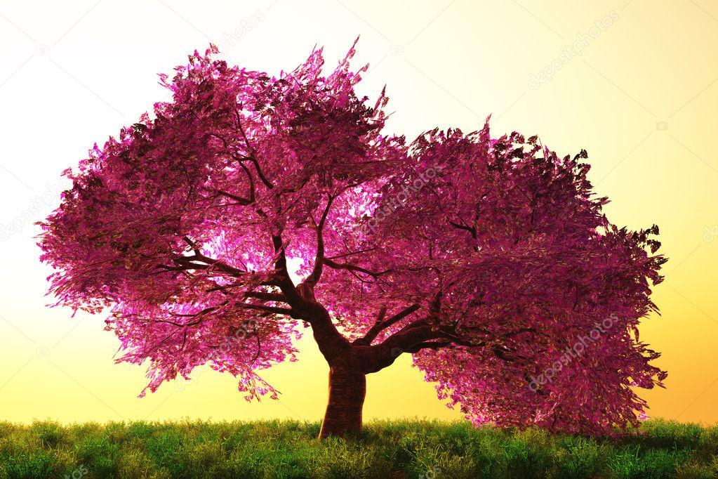 photo by akko さくら Japanese cherry blossom tree