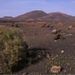 Volcanic park on Canary Islands — Stock Photo #10345473
