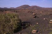 Volcanic park on Canary Islands — Stock Photo
