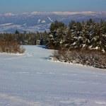 Picturesque winter — Stock Photo