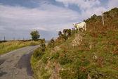 Road in Snowdonia — Stock Photo